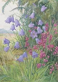 Harebell & Bell Heather - M. W. Tarrant