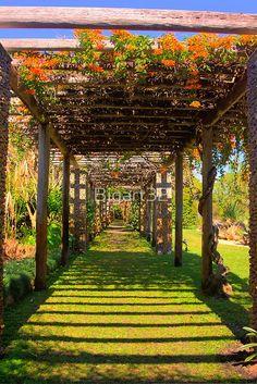 'Trellis, Bougainvillea, Fairchild Gardens, Coral Gables' by - Modern Bougainvillea Trellis, Rustic Patio, Garden Trellis, Flower Trellis, Dream Garden, Garden Planning, Garden Paths, Garden Projects, Garden Inspiration