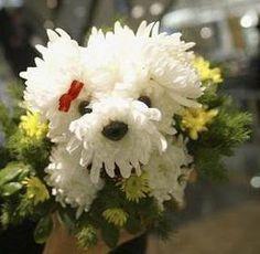 Curiosos e Engraçados: Arranjos de Cachorrinhos