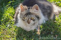 Affectionate cat look in the garden on green grass
