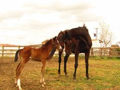 PSI de Cría Horses, Animals, Horses For Sale, Running Horses, Born In March, Equestrian, Animales, Animaux, Animal