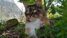 My cat enjoying the nice weather #aww #cute #cutecats #catsofpinterest #cuddle #fluffy #animals #pets #bestfriend #boopthesnoot