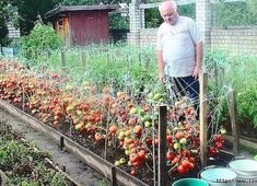 99 Unusual Vegetable Garden Ideas For Home Backyard - New ideas Vegetable Garden For Beginners, Gardening For Beginners, Vegetable Gardening, Summer House Garden, Home And Garden, Garden Paths, Garden Landscaping, Landscape Design, Garden Design