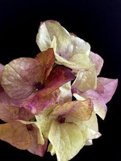Wafer paper hydrangea - cake by  Alena Ujshag Wafer Paper Flowers, Sugar Flowers, Cake Tutorial, Flower Tutorial, Hydrangea, Orchids, Sculpting, Cake Decorating, Rose