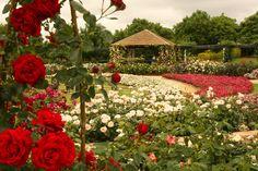 Rose Garden Spectacular at Hunter Valley Gardens