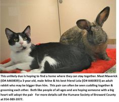 Best Friends - Cat & Rabbit - Need a Home Before Shelter Time Is Up