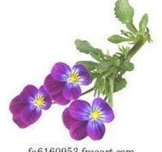 Pansy - Art-Print Pansies, Art Prints, Plants, Art Impressions, Fine Art Prints, Planters, Art Print, Plant, Violets