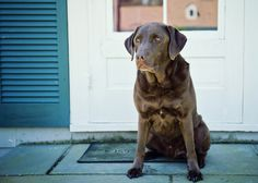 How to take meaningful pictures of your dog. Would probably work for cats, too ;)