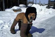I mean.. you've got to protect your dog from evil salt and snow and ice and the cold...