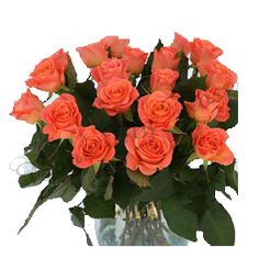 Bunch Of 20 Orange Roses #OrangeRoses