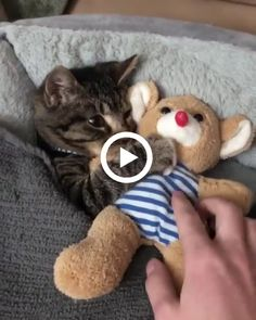 This is a true mother Cute Baby Cats, Cute Baby Animals, Kittens Cutest, Animals And Pets, Cats And Kittens, Funny Animals, Cute Puppy Videos, Funny Animal Videos, Cute Animal Pictures