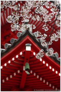 red, Spring in Daikakuji 大覚寺 temple, Kyoto, Japan. Japanese Culture, Japanese Art, Japanese Temple, Japanese Kimono, The Wicked The Divine, Oriental, Flora Und Fauna, Female Knight, Sakura