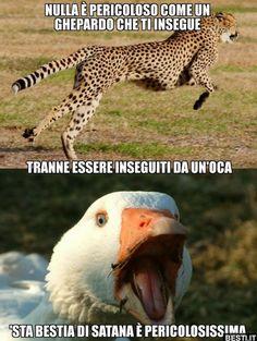 Animals And Pets, Funny Animals, Cute Animals, Hahaha Hahaha, Verona, Bad Humor, Savage Quotes, Funny Scenes, Animal Memes