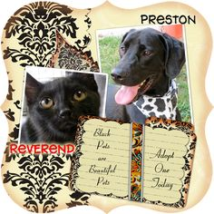 Port Jervis Humane Society Events  Preston & Reverend are up for adoption!