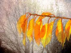 Image result for dewdrop people flickr Morning Dew, People, Image, Folk