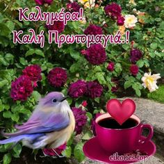 Love Pictures, Good Morning Quotes, Bird, Plants, Animals, Home Decor, Egypt, Animales, Decoration Home