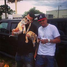 Tigers *.*