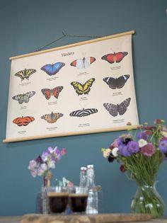 De schoolplaat Vlinders is een geweldige blikvanger voor aan de muur. Op…