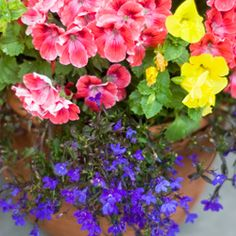 Thrillers, fillers & Spillers: How to Design a Container Garden www.halifaxseed.ca