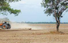 La potencia agrícola de Casanare, que se evidencia en las cerca de 140.000 hectáreas sembradas de arroz, podría ser una señal de degradación ambiental.  / Cortesía Instituto Humboldt