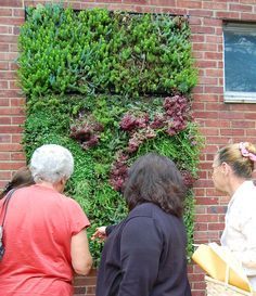 Herrick's Community Center Sensory Garden, a green wall specially designed for Alzheimer's patients.