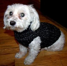doggy sweater pattern knifty knitter