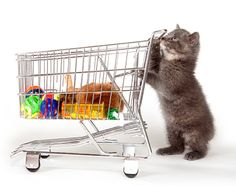 How To Shop At An Online Petstore #shoppingonlineforpets
