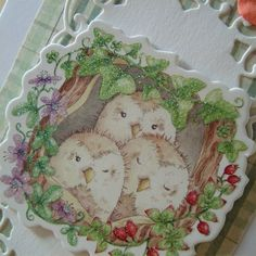 British Wildlife - Owls Birthday Card