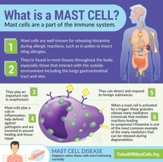 What is Mast Cell Activation Syndrome? High Histamine Foods, Mast Cell Activation Syndrome, Physical Stress, Muscle Anatomy, Lymphatic System, Autoimmune Disease, Lyme Disease, Health Facts, Fibromyalgia