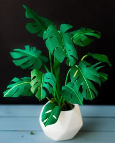 Crepe Paper plant by titian.ari