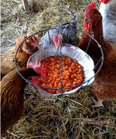 Florassippi Girl: DIY Swinging Treat Holder for Chickens (On the Cheap!)