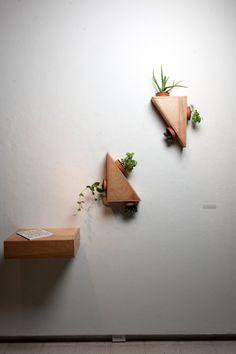 5plantas