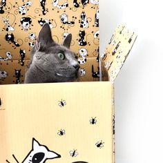 #catsofmelbourne #catloverpeople #catgift #catideas #melbourne #catsofmelbourne #kittens #kitten #pets #pet #instacat #instacats #catstagram #kitty #catsofinstagram #instagramcats #catoftheday #lovecats #crazycatlady #catlover #catlife #meow #catsoftheworld #catwithabox #catbox #catgifts #cattoys #catsofinstagram #cat #cats #catlover #catlovers #catloveboxes #catwithaboxes #catfun #aww @catwithabox