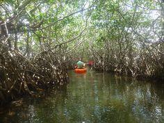 kayaking amongst Mangroves, Hopkins, Belize