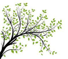 Vektor - dekorativen Zweig Silhouette und grünen Blättern, weißen Hintergrund Stockfoto - 12490277