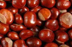 Cudowne właściwości kasztanowca Sweet Chestnut, Polish Recipes, Beauty Care, Health And Beauty, Natural Remedies, Herbalism, Spices, Health Fitness, Food And Drink