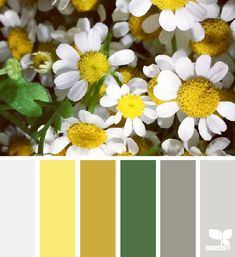 Flora Palette - http://design-seeds.com/index.php/home/entry/flora-palette17