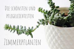 Die schönsten und pflegeleichtesten Zimmerpflanzen