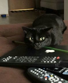 Wanna watch TV with me?
