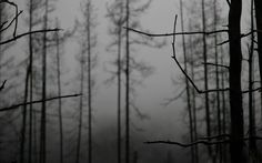 Nature_Forest_Branches_of_trees_in_the_winter_036738_.jpg (2880×1800)