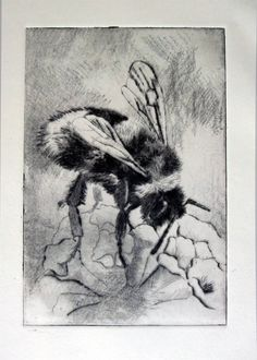 etching value chart printmaking Intaglio Printmaking, Collagraph, Drypoint Etching, Art Alevel, Etching Prints, Bee Art, Insect Art, Encaustic Painting, Wildlife Art
