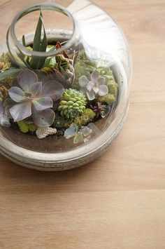 Step By Step Terrarium How To - Discover, a blog by World Market~ Just HOLD me BACK!!
