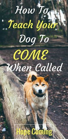 training dog to come. training a dog to come, puppy recall, dog recall, off leash training, training your dog to come, dog come, teaching a dog to come, dog training recall problems, puppy training recall problems #dogtrainingcome #dogleashtraining