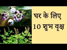 These 12 Plants Will Bring Positive Energy in Your Homes! - YouTube
