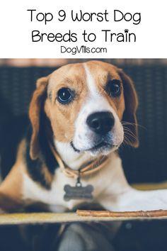 Dog Grooming Golden Retriever 9 Worst Dog Breeds to Train.Dog Grooming Golden Retriever 9 Worst Dog Breeds to Train Mastiff Breeds, Hound Breeds, Dog Breeds List, Best Dog Breeds, Best Small Dogs, Best Dogs, Asian Dogs, Best Dog Training, Training Tips