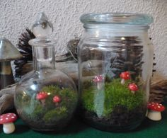 The Enchanted Tree: Moss gardens in a Jar.