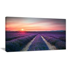 "DesignArt Endless Rows of Lavender Flowers Modern Landscape Photographic Print on Wrapped Canvas Size: 16"" H x 32"" W x 1"" D"