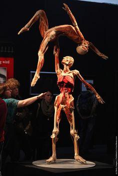 "Plastinificated dancers by ""Doctor Death"" Gunther von Hagens. Human Anatomy Art, Anatomy For Artists, Anatomy Drawing, Human Body Exhibit, Gunther Von Hagens, Bodies Exhibit, Artistic Visions, Corpse Pose, Art Model"
