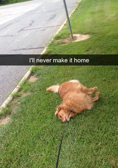 15+ Hilarious Dog Snapchats That Are Impawsible Not To Laugh At