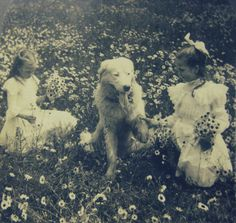 """""""In the Daisy Field"""" - 1908"""